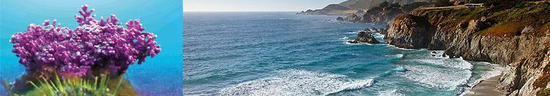 「OUTLET即期良品」IVITAL艾維特®海藻鈣1000毫克可嚼錠(100錠)奶素