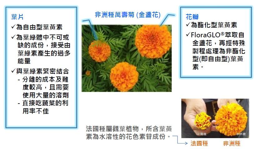 KEMIN授權 IVITAL艾維特®金盞花萃取葉黃素+玉米黃素植物膠囊(45粒)全素