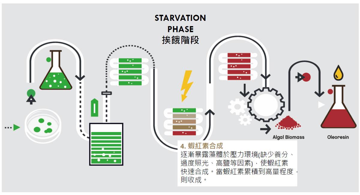 IVITAL艾維特®冰島蝦紅素 三期栽培法 超臨界CO2萃取法