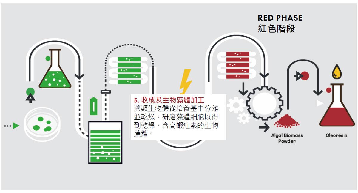 Astalif 蝦紅素 三期栽培法 超臨界CO2萃取法