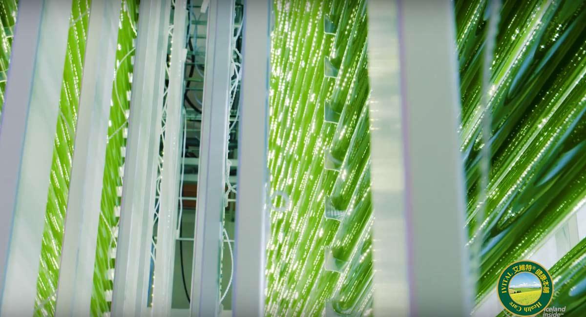 Astalif Astaxanthin 冰島蝦紅素-室內密閉式24小時光生物反應培育系統