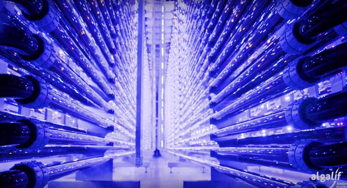 Astalif 蝦紅素-室內密閉式24小時光生物反應培育系統