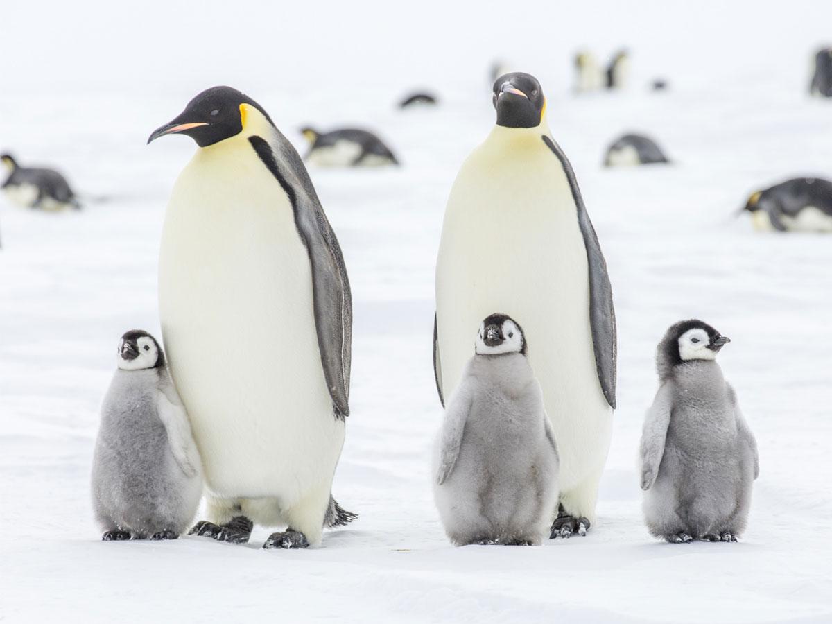 少了磷蝦,海洋生態將完全崩潰,人類別跟企鵝搶奪食物了 IVITAL艾維特®冰島蝦紅素
